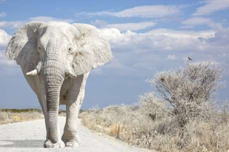 حکایت مدیریتی فیل سفید